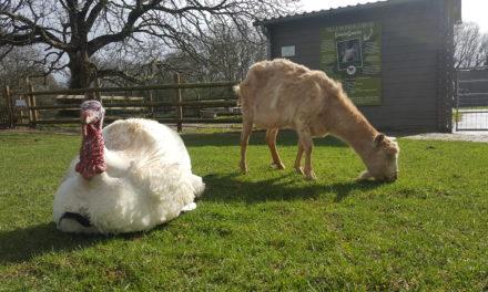 Le Refuge Groin-Groin : La retraite pour les animaux !