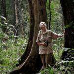 Institut Jane Goodall : Un engagement pour la conservation des chimpanzés